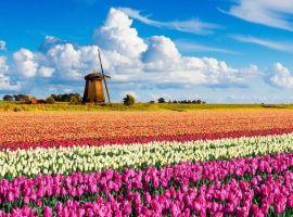 Vé máy bay đi Hà Lan chỉ từ 30 USD/chiều – Đặt ngay hôm nay!
